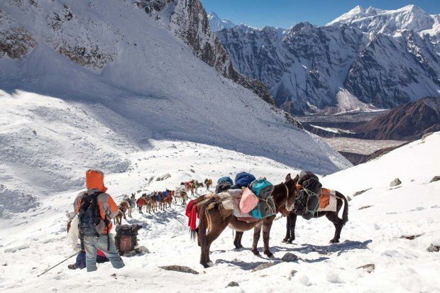 manaslu larkya pass crossing mules