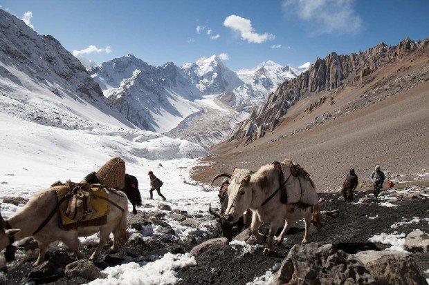 rui-la-manaslu-border-tibet-yaks